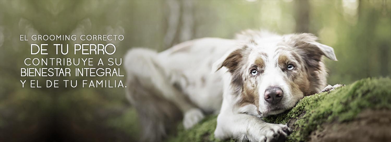 peluquería canina perros en bogota